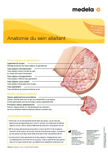 Anatomie vd borst FR infographic